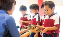 ウミガメの保護活動を体感する特別授業「ウミガメ移動教室」